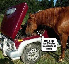 haha horsepower