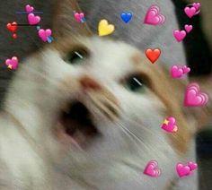 60 Ideas for memes apaixonados gatos Cute Cat Memes, Cute Animal Memes, Cute Love Memes, Kittens Cutest, Cute Cats, Funny Cats, Cute Baby Animals, Funny Animals, Memes Lindos