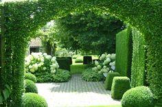 De buksboom garden Holland