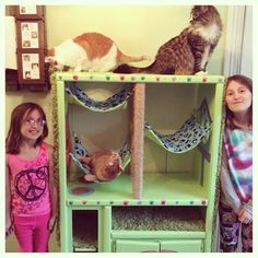 The kitties giving it a good sniffing!   So last summer, my girls (6 and 9) and I started to volunteer once a week at the local animal ...