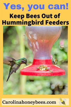 It is possible to keep bees away from humming bird feeders. Yes, a few simple tips for feeder placement can make a big difference in the battle. #hummingbirds #bees #gardens