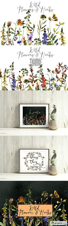 Wild Flowers & Herbs Watercolor Set  stock images