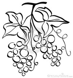 Grape Illustration Royalty Free Stock Image - Image: 15170226