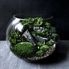 Bio-Bowl Terrarium with Organic Woodland Plants  by DoodleBirdie