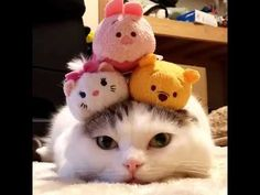 Healthy recipes for weight loss and muscle gain for women chart size Funny Cat Videos, Funny Cats, Funny Animals, Cute Animals, Cute Cats And Kittens, Cool Cats, Kittens Cutest, Kitty Cats, Cute Cats Photos