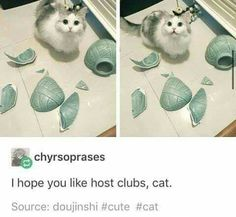 Picture memes 3 comments — iFunny – So Funny Epic Fails Pictures Colégio Ouran Host Club, Ouran Highschool Host Club, Host Club Anime, High School Host Club, Manga Anime, Anime Cat, Manga Cat, Tsurezure Children, A Silent Voice