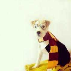 10 amazing DIY Harry Potter Costume tutorials to inspire your DIY Halloween costume! Including props!