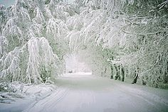 The Tunnel of Trees, near Petoskey, Michigan....so beautiful!  I want to go there this winter and see this!