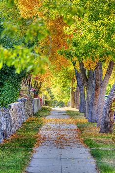 Autumn Sidewalk, Helena, Montana Studio Background Images, Background Images For Editing, Photo Background Images, Photo Backgrounds, Blurred Background, Wallpaper Backgrounds, Wallpapers, Jardim Natural, Foto Nature