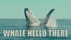 New party member! Tags: animals cool hello welcome waving splash whale puns pun whales bad pun