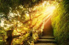 Sunlight Stairway,Plitvice, Croatia(via weheartit)