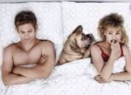 How Your Dog Sleeps May Reveal How Happy You Are As A Canine Couple - Your dog is the jealous type, they want you and only you - they will cut you off from your partner and not think twice about it. Fresher Tips, Marriage And Family, Sleeping Dogs, Your Pet, Pillows, Pets, Couples, Funny, Happy