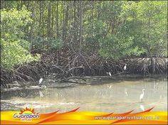 manguezais - MySearch