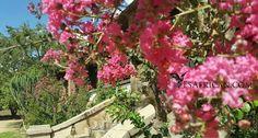 Some colour outside Maganga House