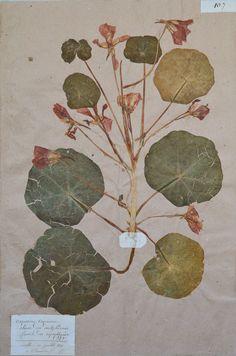 Beautiful antique herbarium