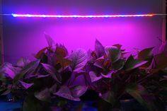 Bonlux 4-Packs 600MM Waterproof LED Grow Flexible Strip Light 12V Red Blue 3:1 Full Spectrum 5W LED Plant Strip Light Bar for Garden Greenhouse Flowering Plant Hydroponics System: Amazon.co.uk: Lighting