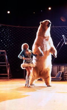 Animal trainer performing with polar bear at the Circus World theme park in Orlando, Florida.  Year: Between 1973 and 1986