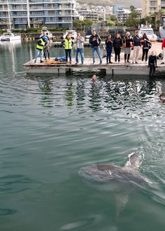 Thanks to the quick reaction of our staff, Summit Crane Hire and H&I Construction, this beautiful sunfish is back in the ocean. Crane, Aquarium, Construction, Beautiful, Goldfish Bowl, Building, Aquarium Fish Tank, Aquarius, Fish Tank