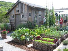 SWR Grünzeug Garten - Google-Suche