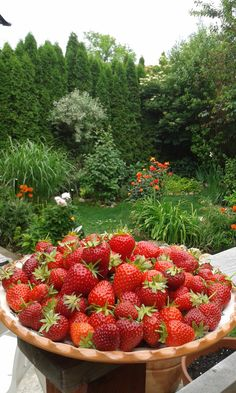 Strawberry Farm, Strawberry Fields, Garden Insects, Natural Kitchen, Beautiful Fruits, Warm Food, Fresh Fruits And Vegetables, Fruit Garden, Food Cravings