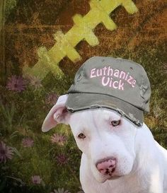 Luna wearing an anti Michael Vick baseball cap, speaking for all the Pitbulls and Dogs of America! Euthanize Vick, boycott Philadelphia Eagles NFL football team and sponsors the hat says it all.the hat says it all. Dog Love, Puppy Love, Mike Vick, Baby Animals, Cute Animals, Michael Vick, Stop Animal Cruelty, Pit Bull Love, Pit Bulls