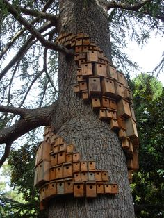 Villa Montalvo, Saratoga, CA - art installation 2011 I am doing this when we get a new place with a whole lot of trees!