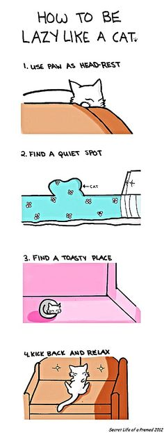 How To Be Lazy Like A Cat . . .   Comic