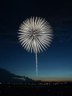 ART IN THE SKY: Ok so I'm actually sitting on the sofa but if I WAS at a fireworks display and not warm and dry under a blanket I would want it to look like this! Almost like a huge Allium flower.