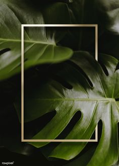 Search Free and Premium stock photos, vectors and psd mockups Phone Wallpaper Images, Framed Wallpaper, Iphone Wallpaper, New Background Images, Leaf Background, Flower Graphic Design, Tropical Background, Backgrounds Free, Leaf Art