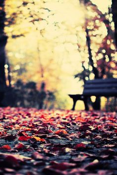 autumn leaves wallpaper for iphone Iphone 5 Wallpaper, Fall Wallpaper, Nature Wallpaper, Mobile Wallpaper, Apple Wallpaper, Cute Backgrounds, Phone Backgrounds, Wallpaper Backgrounds, Wallpapers En Hd