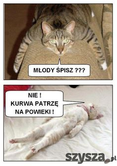 Śmieszne zdjęcia - Szysza.pl Very Funny Memes, Love Memes, Wtf Funny, Funny Cats, Funny Animals, Just Smile, Reaction Pictures, Man Humor, Animal Memes