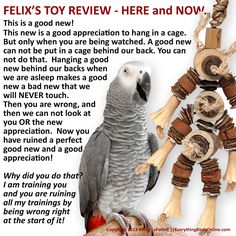 Felix has plenty of bird toy favorites and doesn't mind letting YOU know about it. Bird Cages, Parrot Cages, Feathered Dinosaurs, Funny Parrots, African Grey Parrot, Crazy Bird, Parrot Bird, Bird Toys, Cockatiel