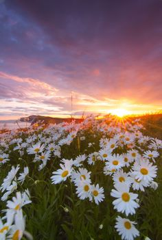 """expressions-of-nature: """"Wild Daisies 03 : Jeremy Cangialosi"""" Daisy Wallpaper, Sunflower Wallpaper, Flower Phone Wallpaper, Nature Wallpaper, Beautiful Landscapes, Beautiful Images, Beautiful Flowers, Nature Aesthetic, Flower Aesthetic"""