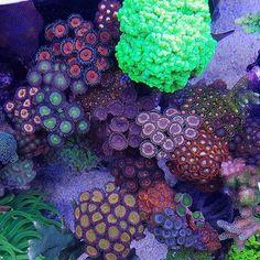 Just need my saw @antonp0st! #polyplab . Just go: www.polyplab.com . . #coral #reeftank #coralreeftank #reef #reefpack #reef2reef #reefcandy #reefersdaily #reefrEVOLution #coralreef #coraladdict #reefaholiks #reefjunkie #reeflife #instareef #allmymoneygoestocoral #instareef #reefpackworldwide #ilovemyreef #rarecorals #reefing #exoticcorals #reefporn #reeferdise #reefers4reefers #coralporn #aquarium #polyplab
