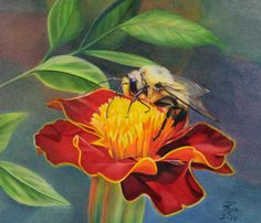 colored pencil drawings of animals | Little Bumblebee by Maria Hathaway Spencer.