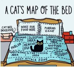 Funny cat map of the bed for cat lovers and owners. Amazing detail of how cats perceive us as they own pet and think they own us. Funny Animal Pictures, Cute Funny Animals, Funny Cute, Cute Kittens, Cats And Kittens, Big Cats, Funny Kitties, Siamese Cats, Crazy Cat Lady