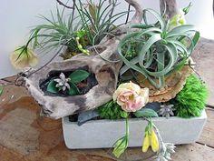 Arrangements Pflanzen Sukkulente Moos Treibholz