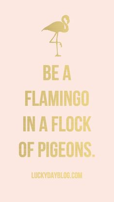be a #flamingo in a #flock of #pigeons #positivemessage #SophiesStore