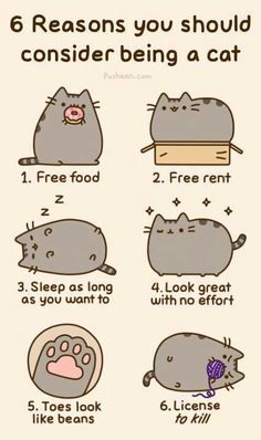 6 reasons you should consider being a cat.