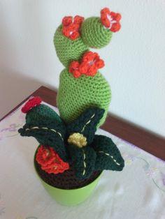 1000 images about piante grasse uncinetto on pinterest for Il blog di sam piante grasse
