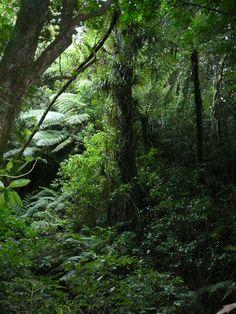 New Zealand native temperate rainforest_019.jpg (480×640)