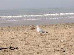 Strandbezoek Zandvoort