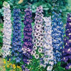 Die 68 Besten Bilder Von Winterharte Pflanzen Garden Plants
