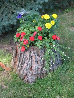 This post contains the most impressive tree stump planters. These planters will definitely make you have an outstanding small garden. Garden Yard Ideas, Garden Trees, Garden Projects, Garden Pots, Garden Decorations, Succulents Garden, Tree Stump Decor, Tree Stump Planter, Tree Stumps