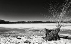 +10000 Photographers BW Monochrome : Contest :  Marlon Rodriguez - Google+ - Last Winter shot