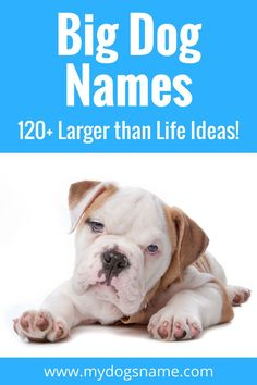 The ultimate list of big dog names. Over 120 larger than life dog names ideas! Perfect for Great Danes, Labrador Retrievers, German Shepherds, Mastiffs, Boxers and any other extra large pup.