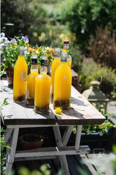 Dandelion Wine - outdoor self reliance