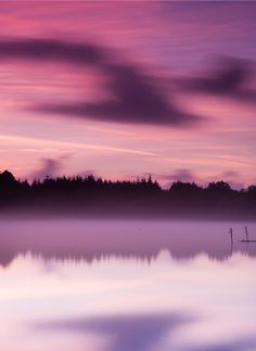 PANTONE Color of the Year 2014 - Radiant Orchid in nature
