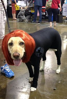 Best Black Widow cosplay ever…