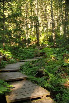 Giant Cedars Boardwalk - Revelstoke, BC